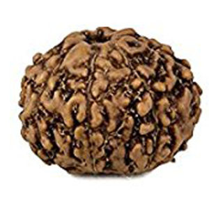a1048-04-8-face-java-rudraksha-copy
